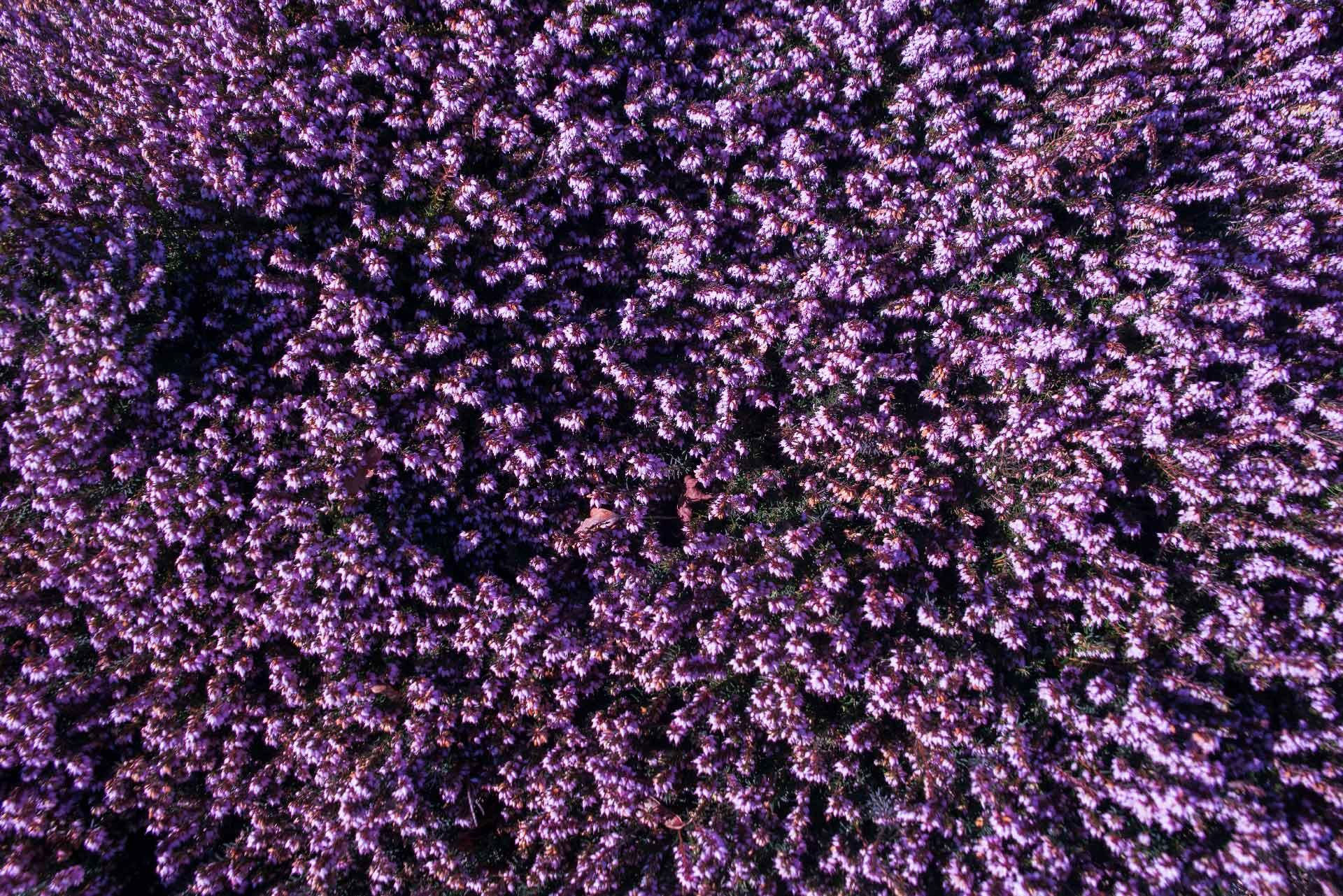 Flowers in Elizabeth Park