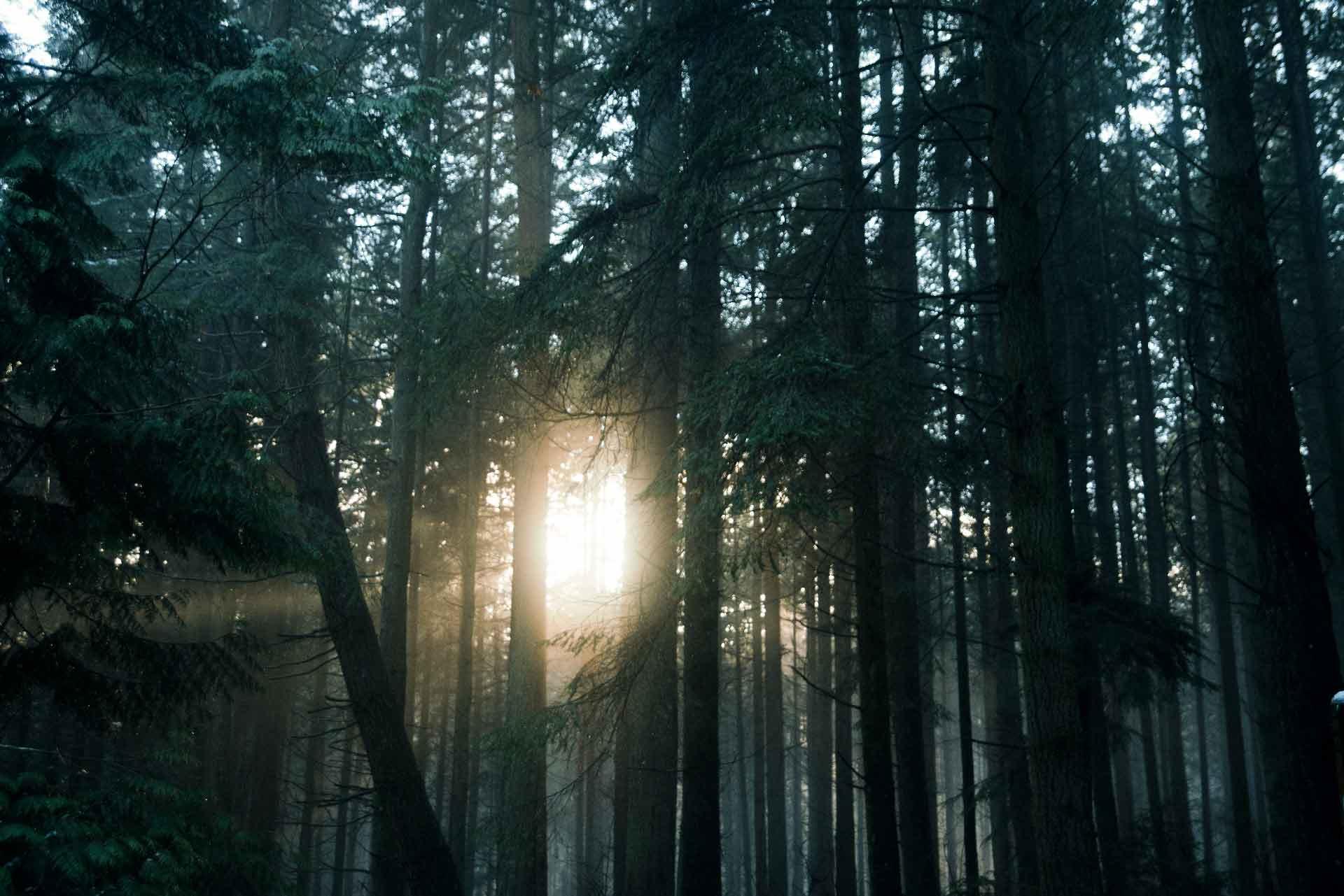 Trees sunset Stanley Park